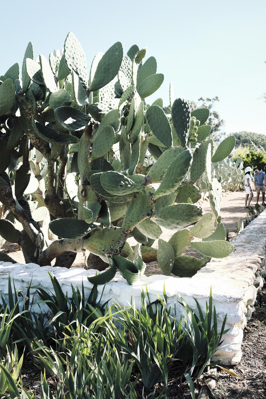 cape-town-south-africa-paarl-babylonstoren-wine-estate-25.jpg