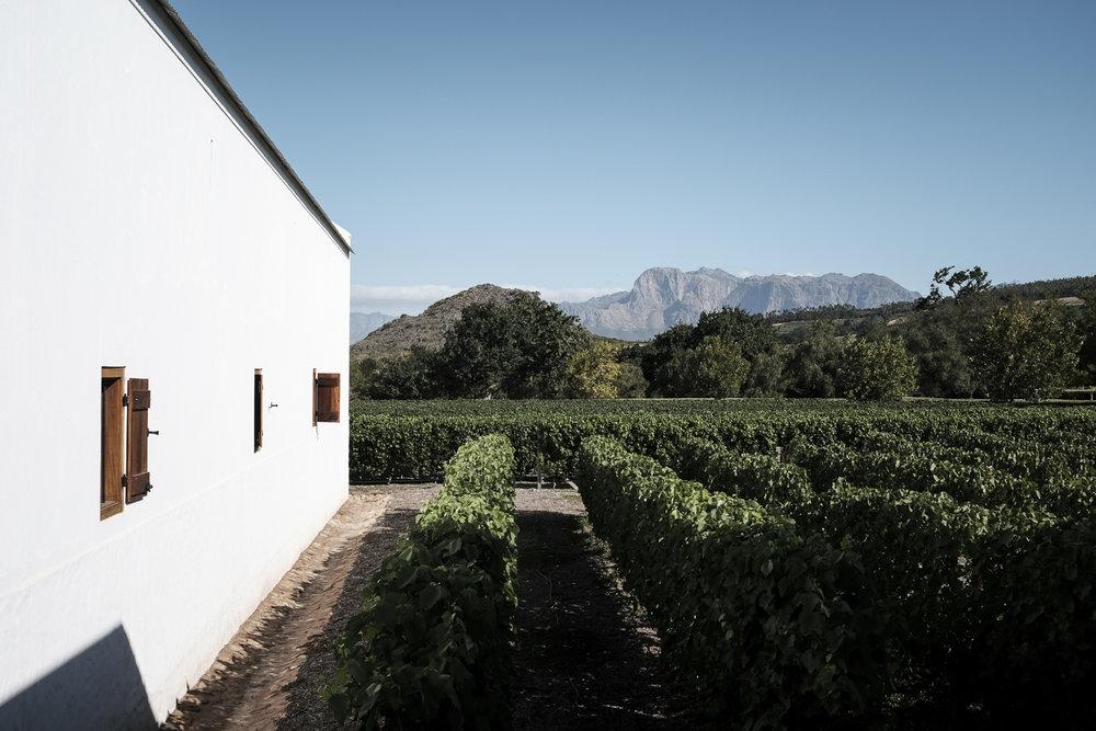 cape-town-south-africa-paarl-babylonstoren-wine-estate-30.jpg