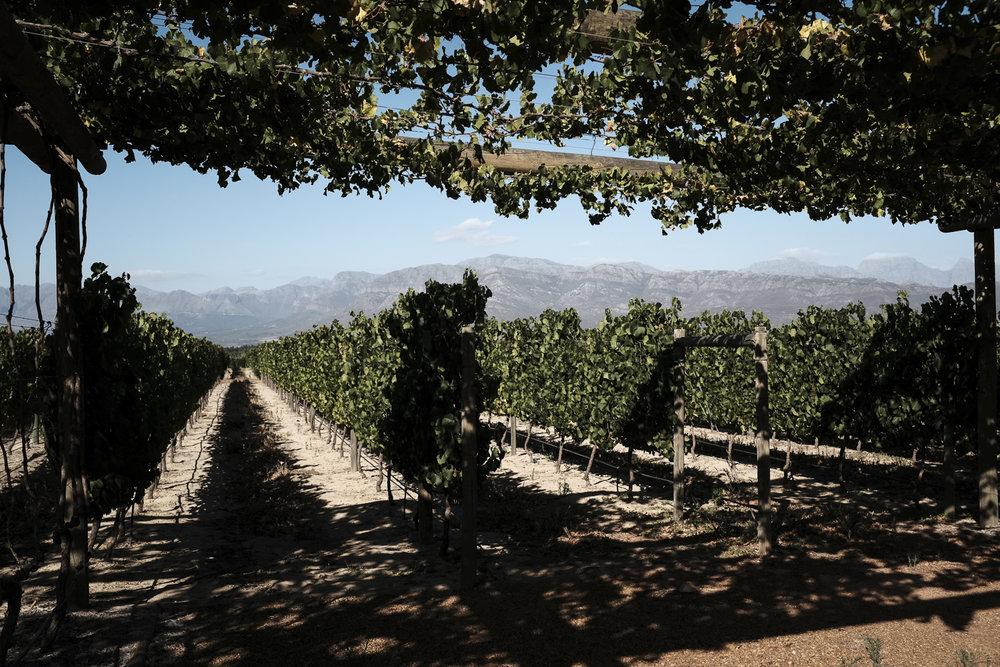 cape-town-south-africa-paarl-babylonstoren-wine-estate-31.jpg