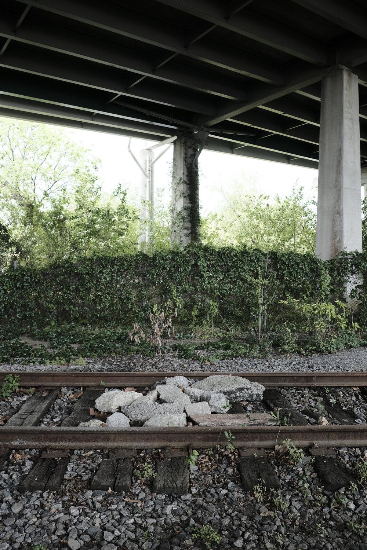 future-corridor-lowcountry-lowline-jared-bramblett-2018-36.jpg