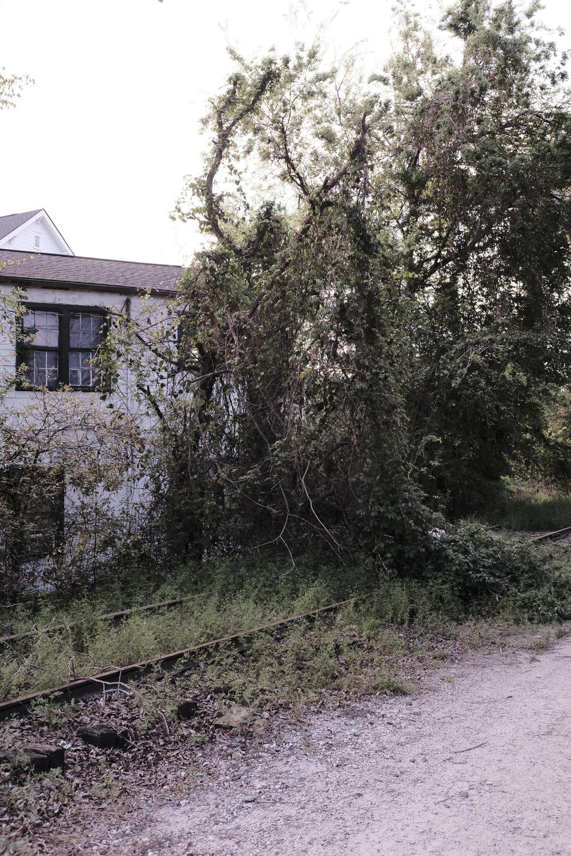future-corridor-lowcountry-lowline-jared-bramblett-2018-2-6.jpg