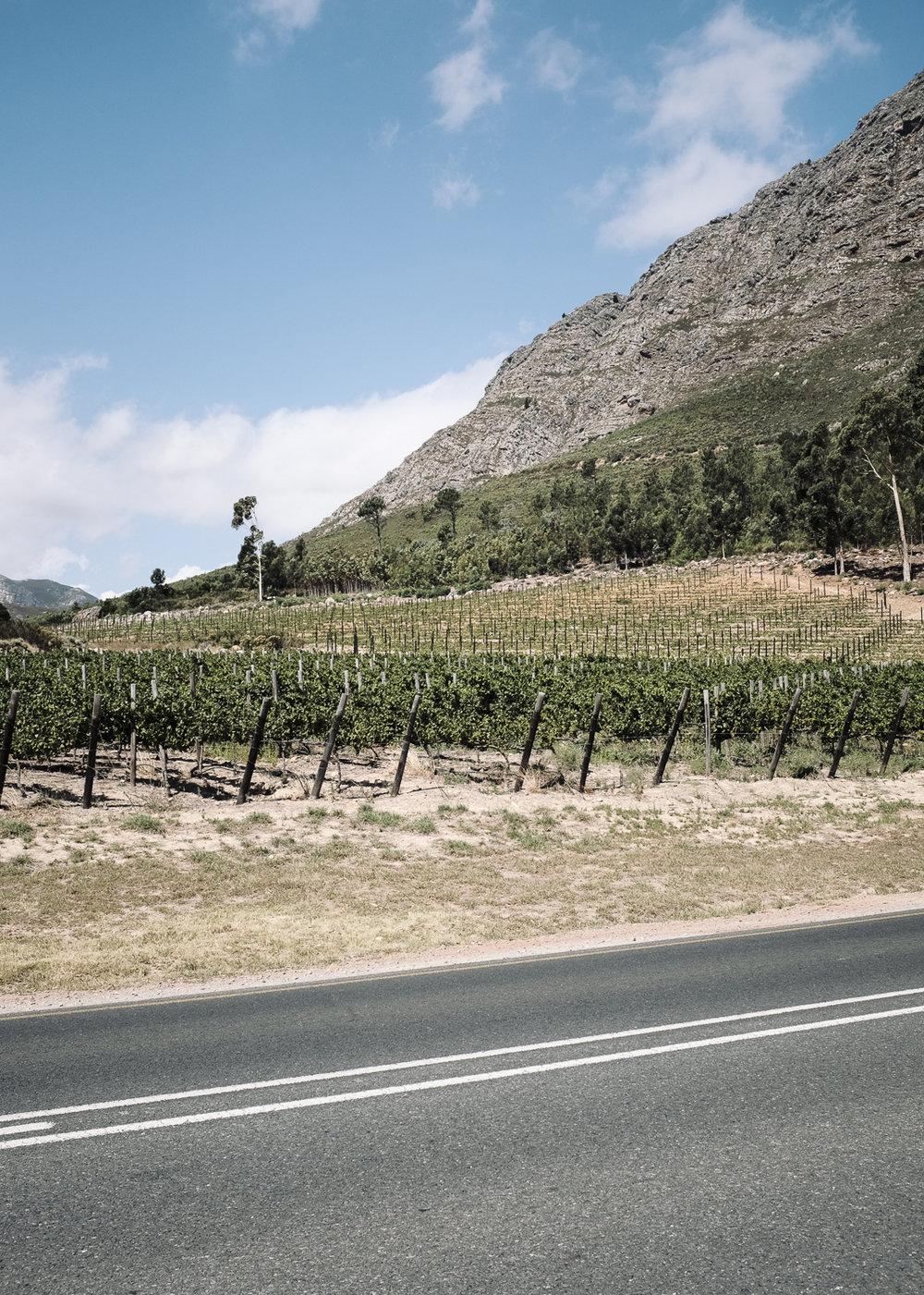 Haute Cabriere Vineyard