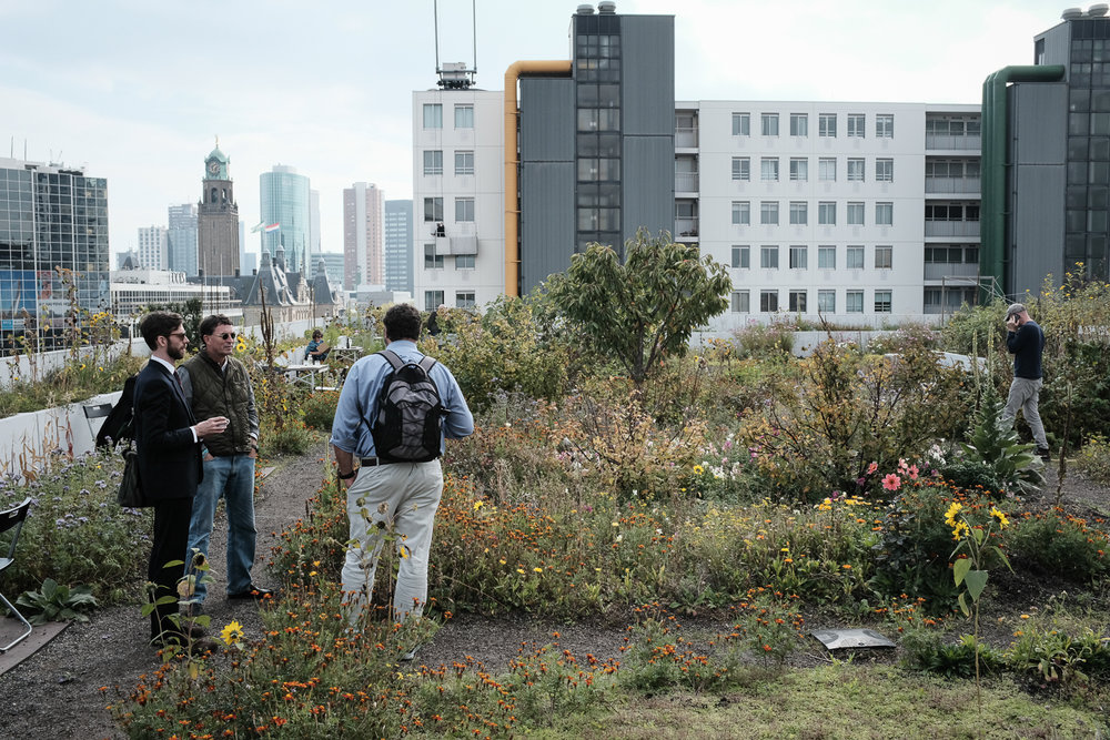 Jacob Lindsey, Planning Director; Jason Kronsberg, Director of Parks, and Councilman Michale Seekings on an urban rooftop garden in the Zoho district of Rotterdam