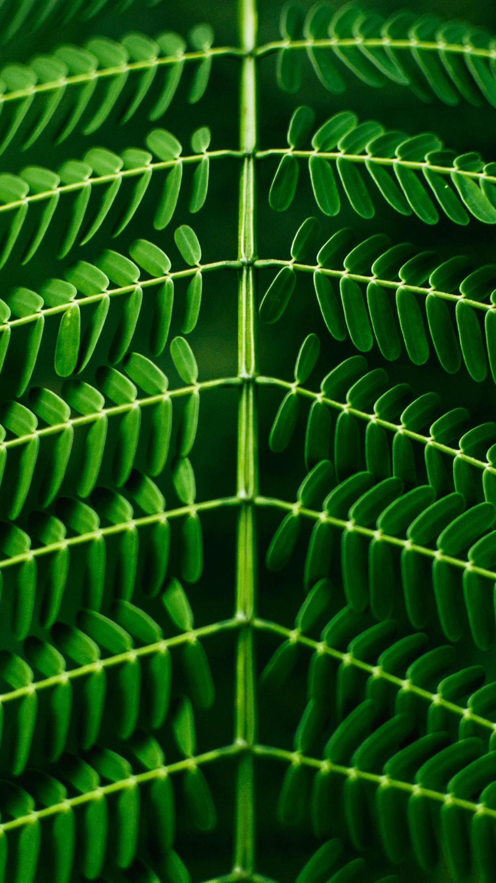 leaf vertical.jpg