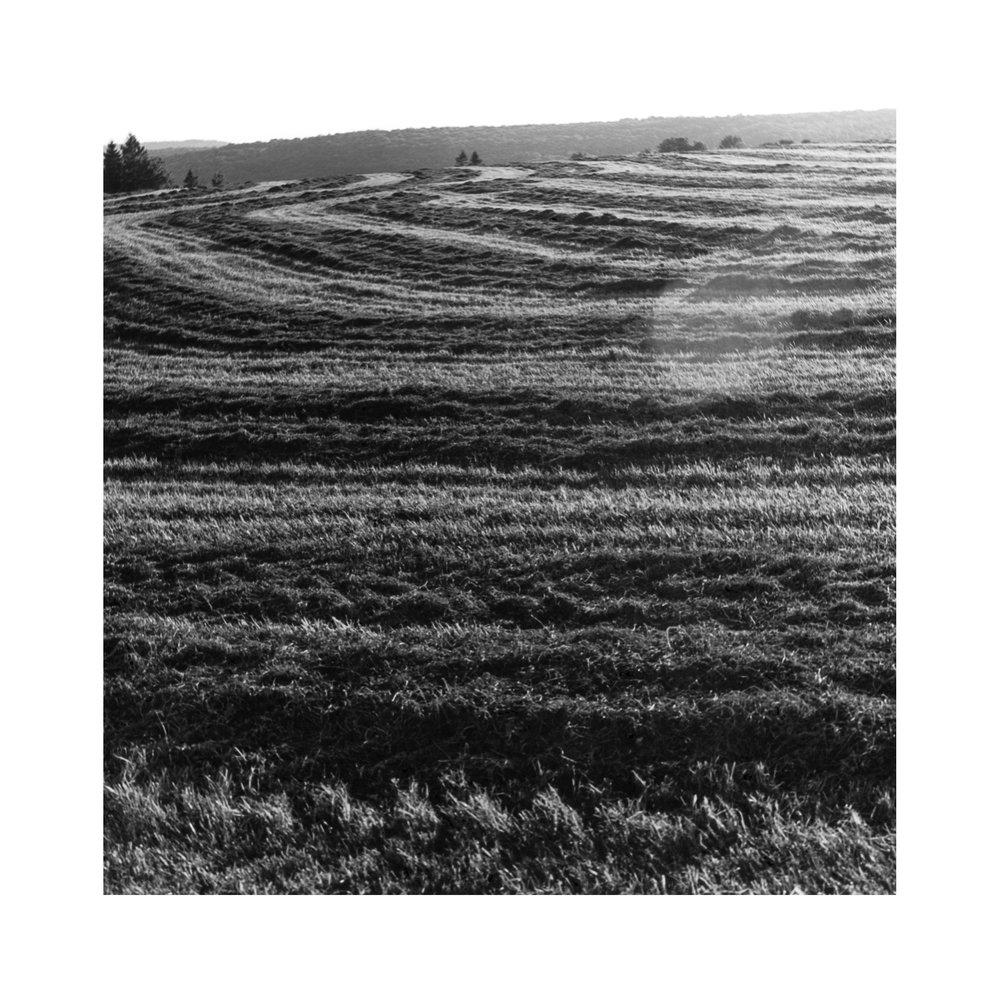 alfalfa pattern2.jpg