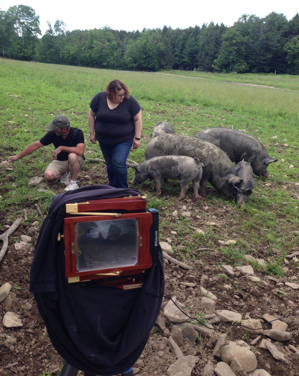 Trying to shoot with a 4x5 at Mulligan Acres Farm.  This was too slow for photographing pigs.  After this shoot, I switched to a medium format Mamiya camera.
