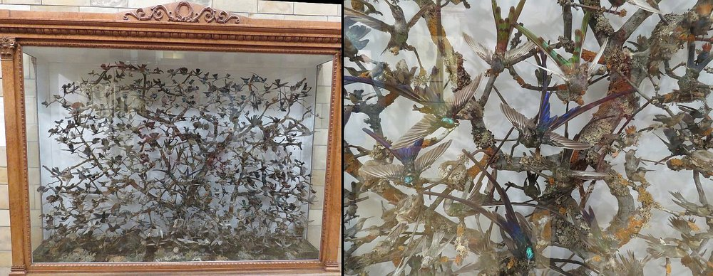 The poor hundred-year-old hummingbirds.