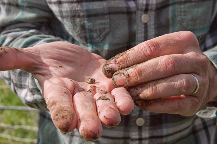 Working with vineyard soil