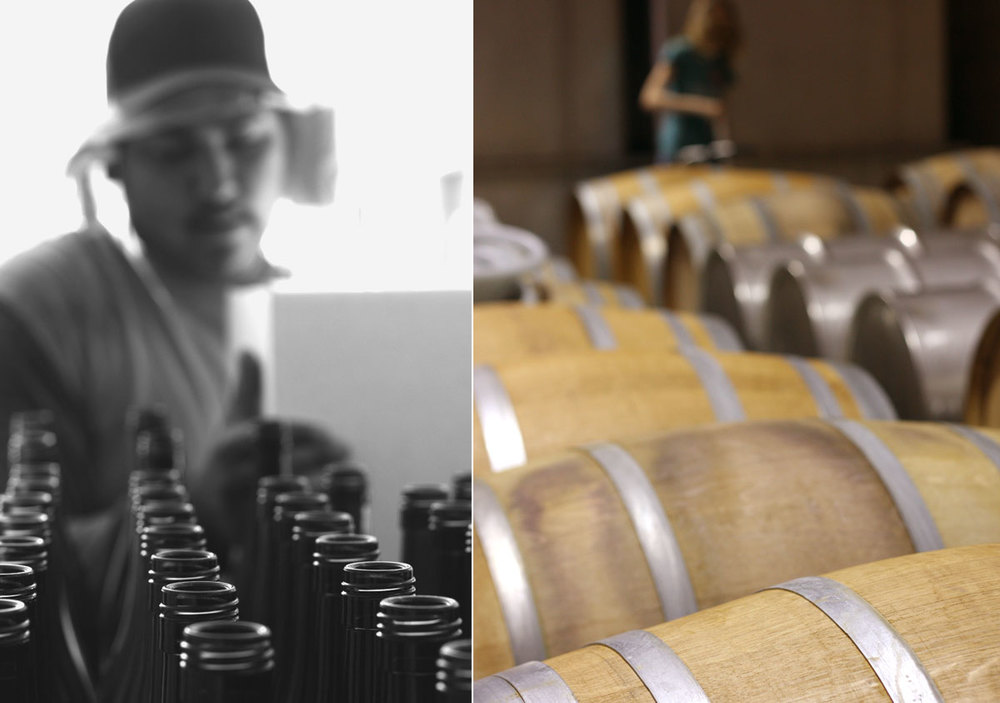 AGING & BOTTLING: Barrels are topped up to full every two weeks and tasted every month. After 11 months at rest, barrels are racked and blended to tank, whites are filtered, and the vintage is bottled by a mobile bottling truck.