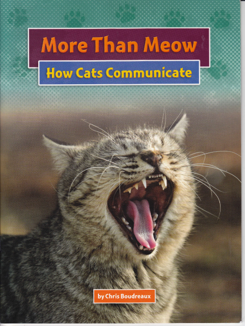 More Than Meow: How Cats Communicate