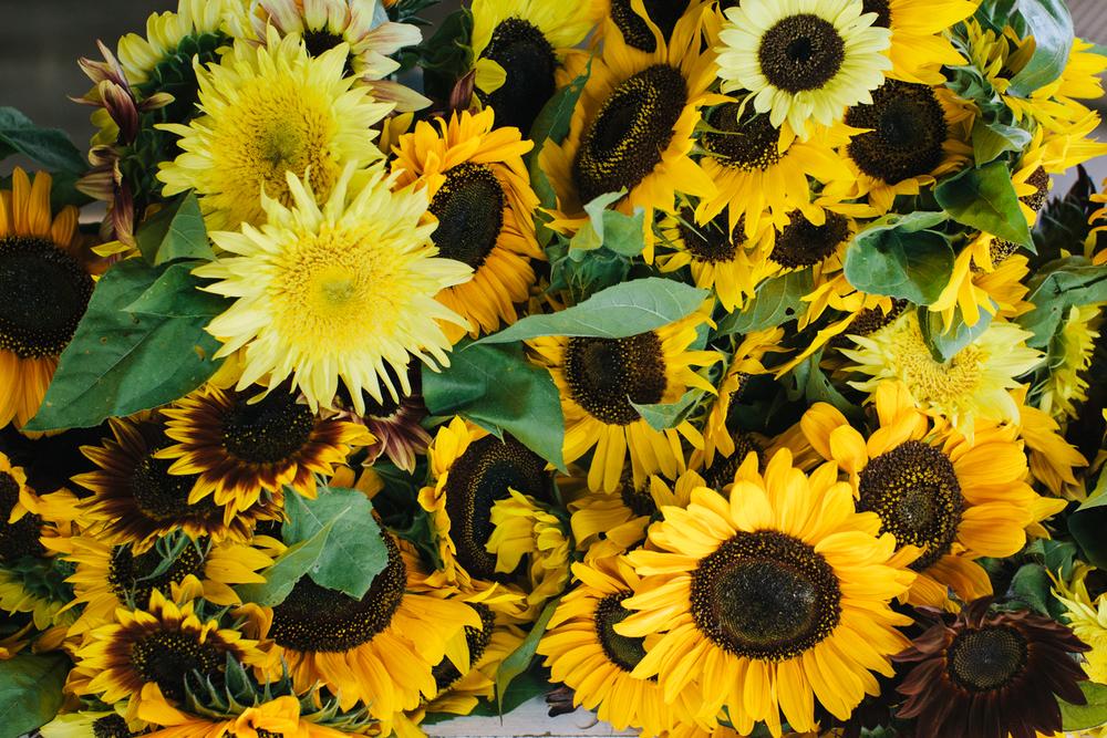 20120816ma_ag_fair-191-2.jpg
