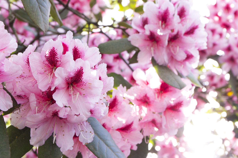 The Transformative Power Of Flowers Jess Arnaudin