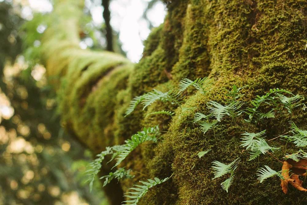 forest-grove2.jpg