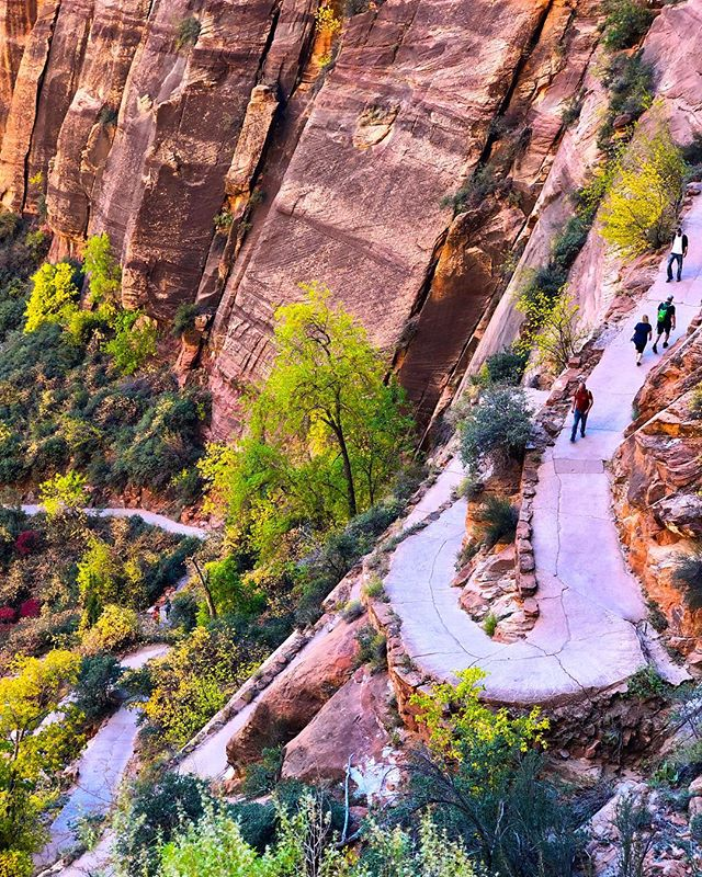 Winding trails up the face of #angelslanding