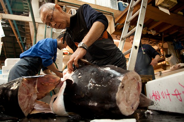 tsukiji_16-620x413.jpg