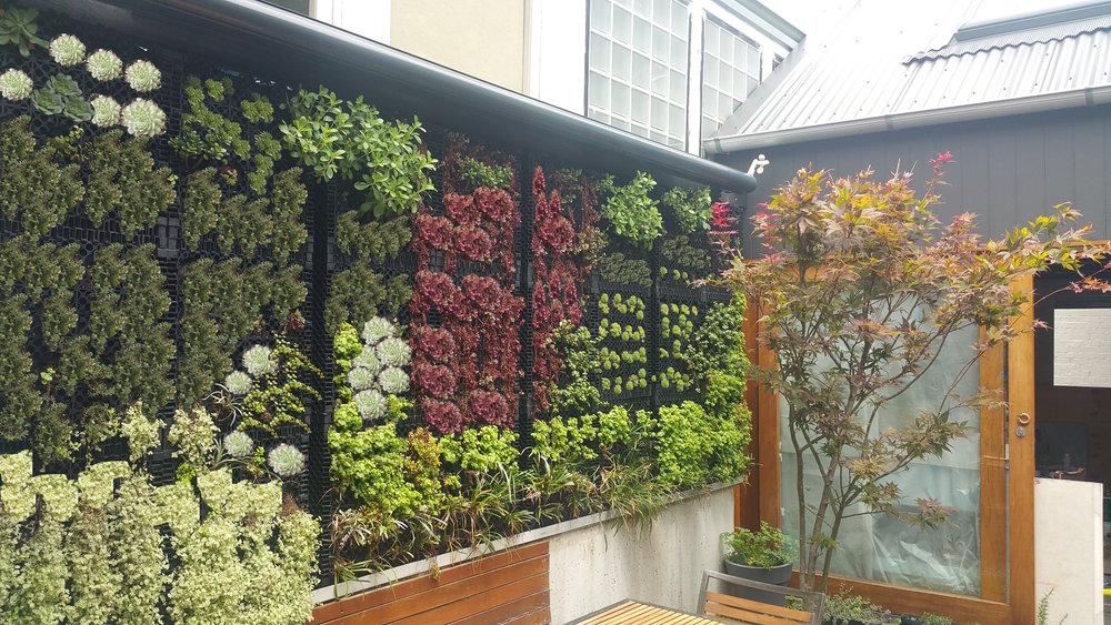 A new green wall adds colour, horticulture and beauty to this compact garden in Newtown.