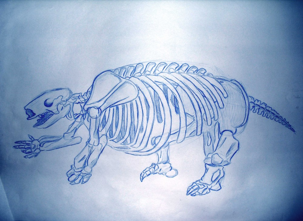 Ground Sloth Skeleton.jpg