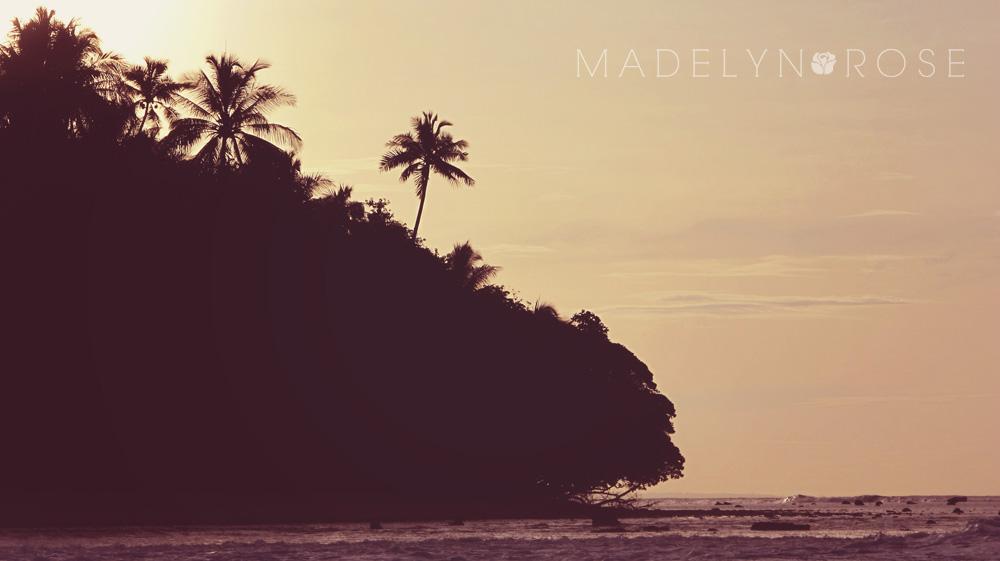 palms copy.jpg