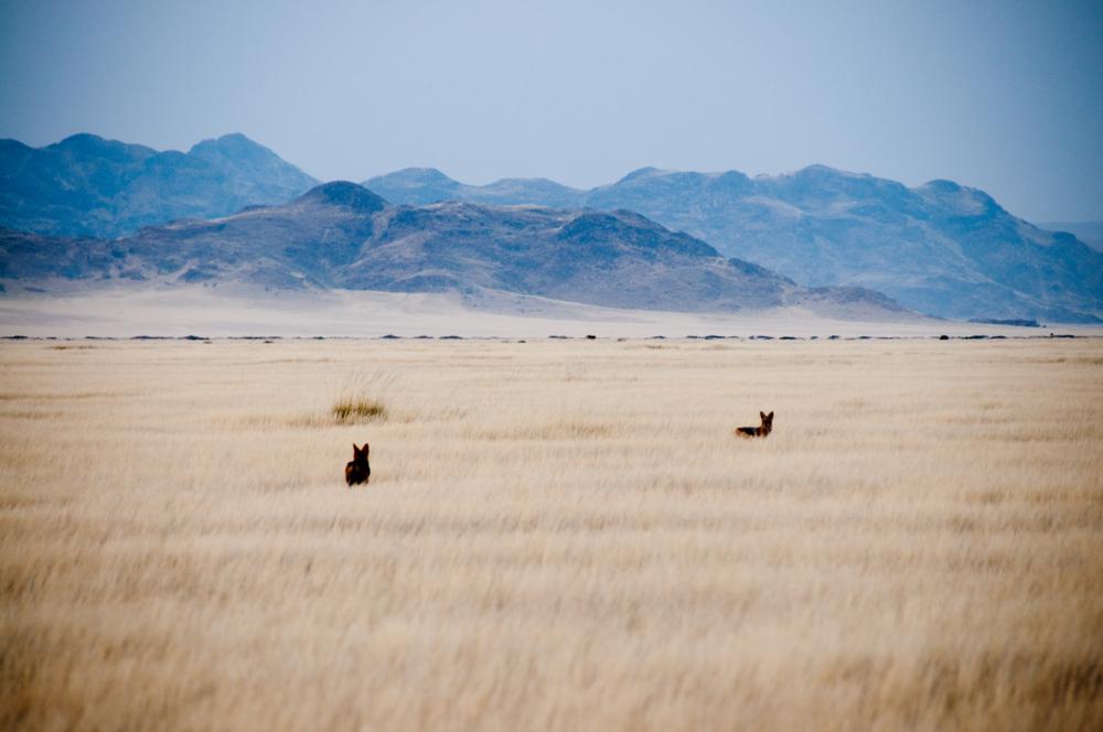 Naukluft-Namib, Namibia