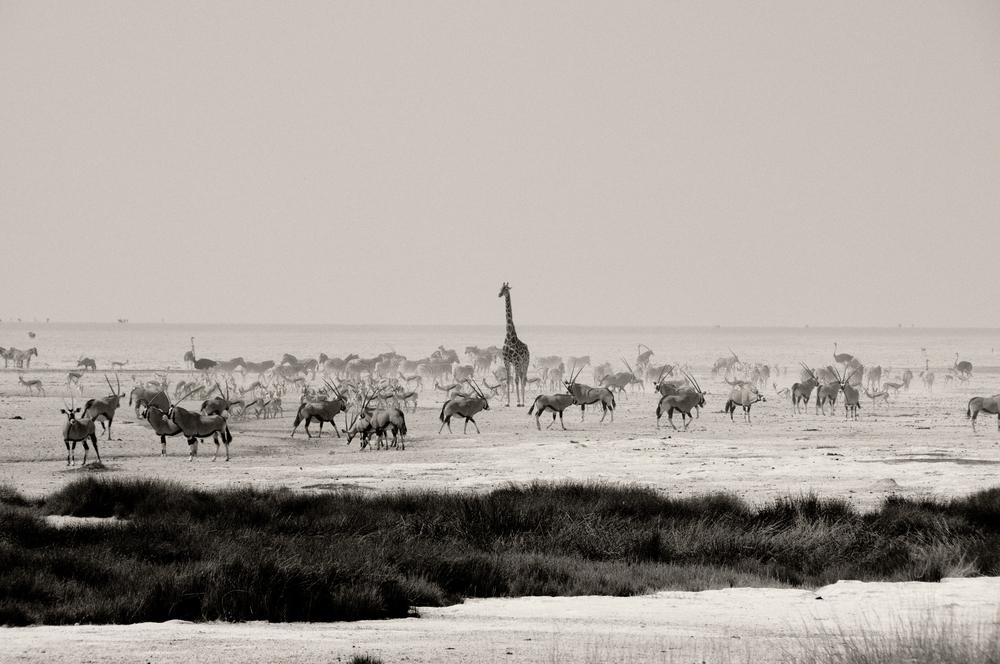 Etosha Salt Pan, Namibia
