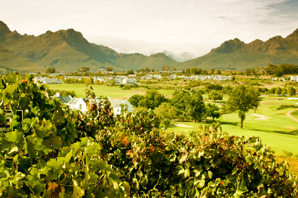 The Kleine Zalze estate