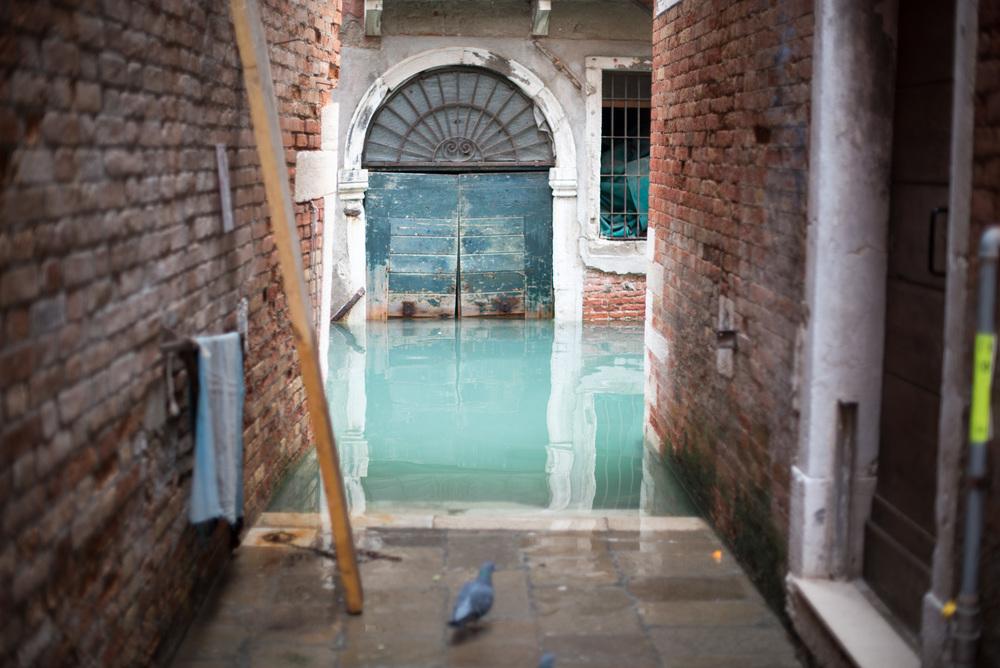 Venice 201412-3.jpg