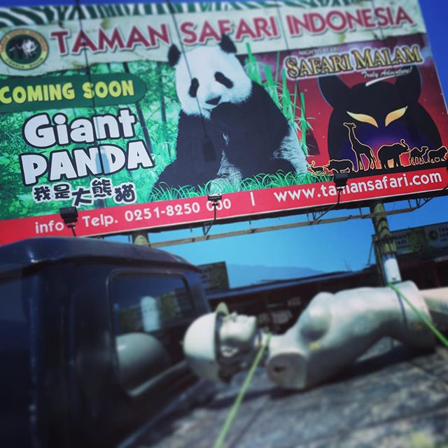 Coming soon... Giant Panda!