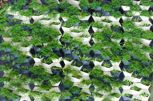 GREEN WALLS & GREEN ROOFS -