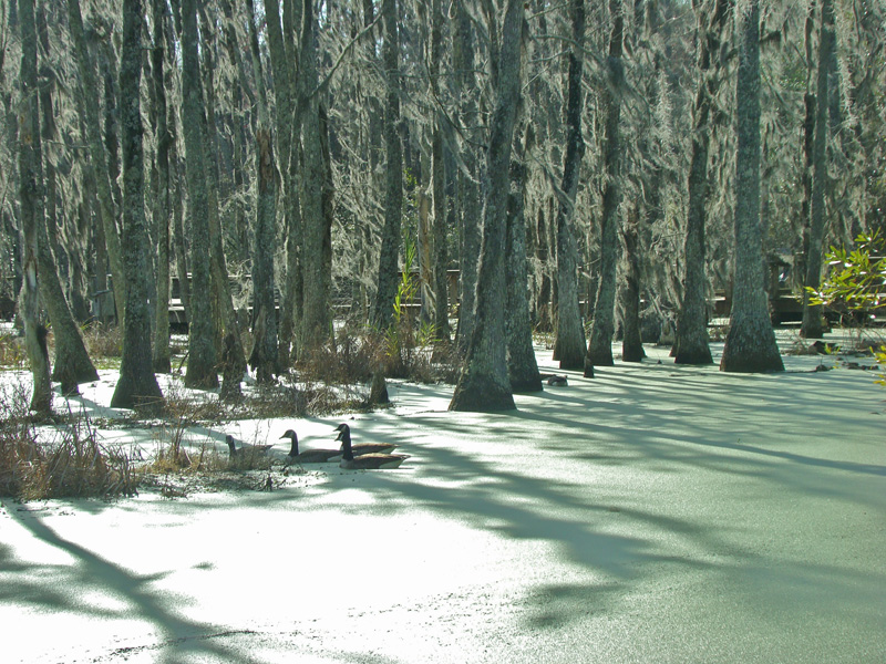 On Green Pond.jpg