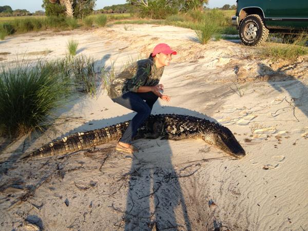 Gator17.jpg