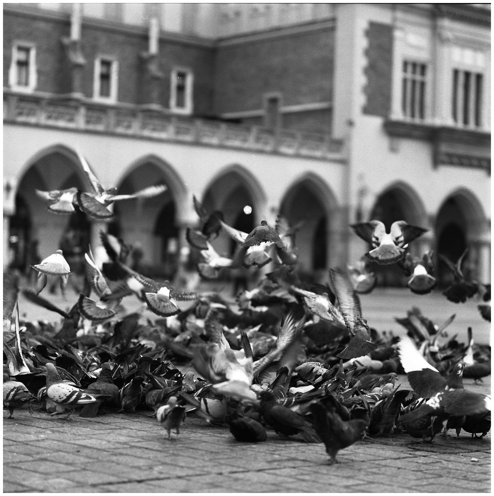 Hassel_BW_Kraków326.jpg