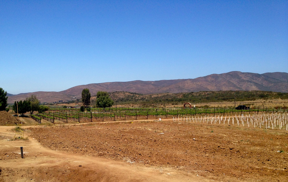 The vineyards at Alximia