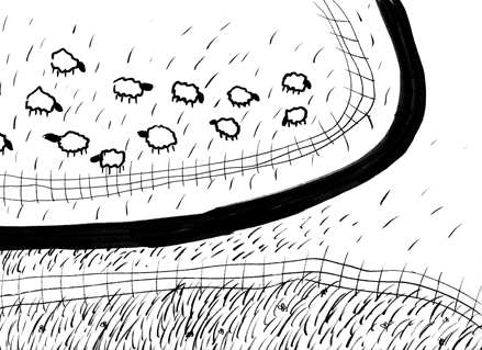 Sheep-1.png