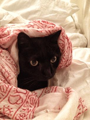 Myles-Blanket.png