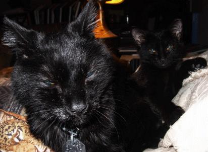 Loki&Agatha.png