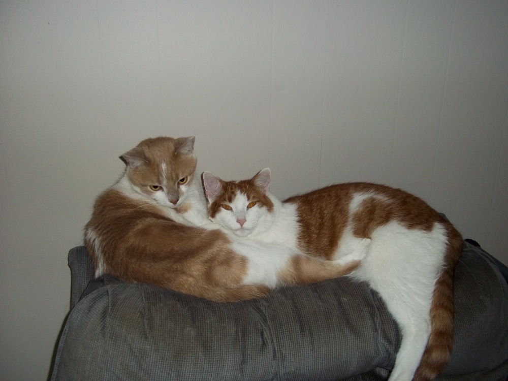 Buddy and Sam.JPG