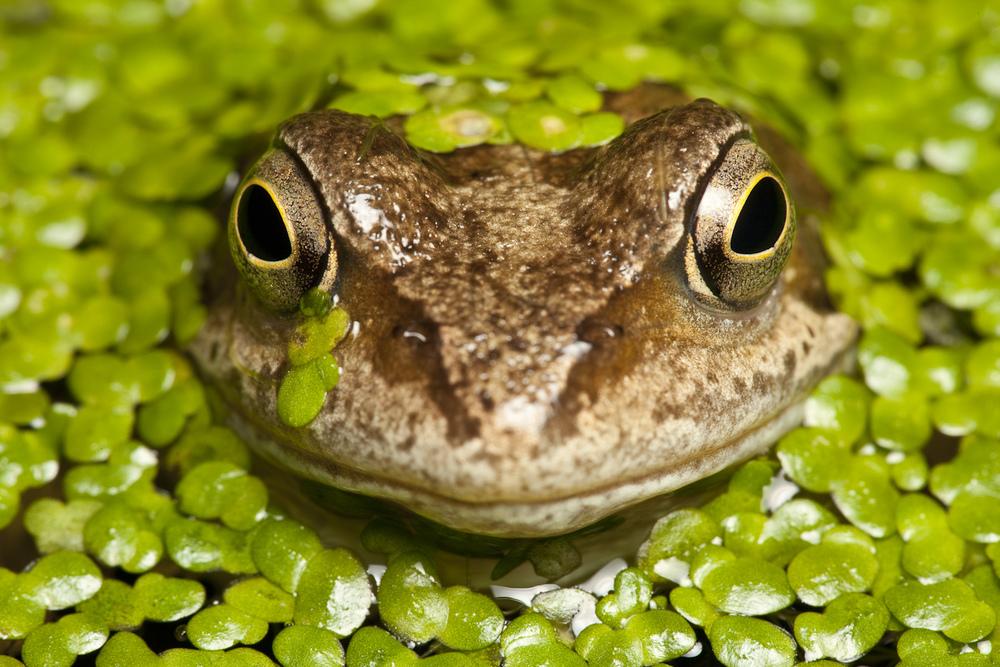 Frog (1 of 1).jpg