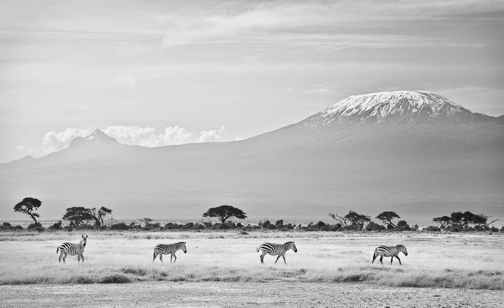 Kili zebras (1 of 1).jpg