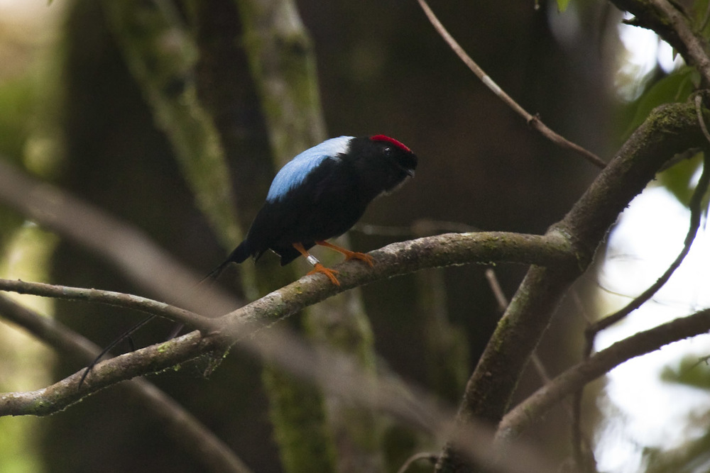 Costa Rica-29.jpg
