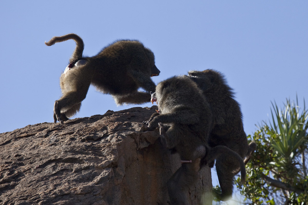 Kenya 2014-9.jpg