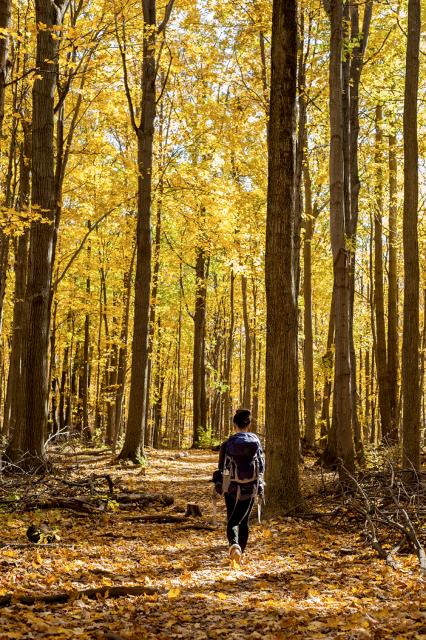 Hiking Through the woods: Mt. Nemo, Burlington, Ontario