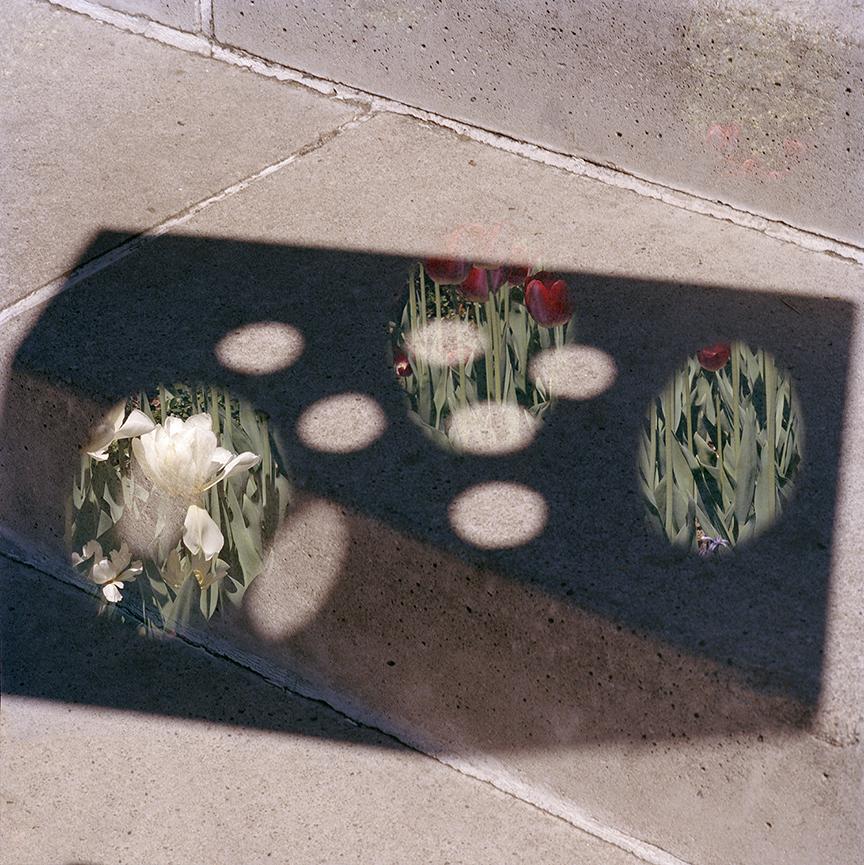 YM_shadowonstairsandflowers_web.jpg