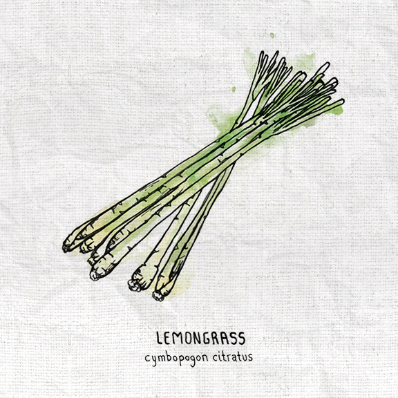 Lemongrass.jpg