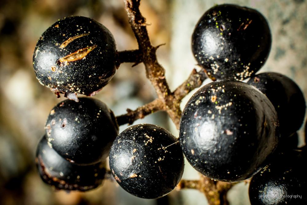 random berries.jpg