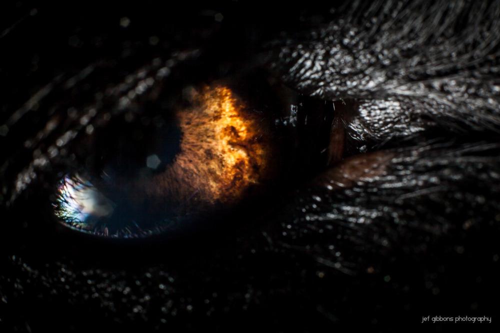 k-eye.jpg