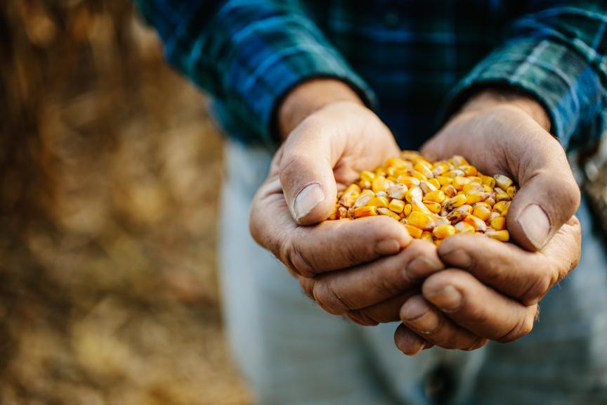farm-commercial-photographer-editorial-food-midwest-milwaukee-1.jpg