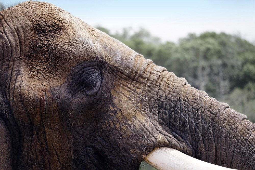 elephant©2015seanhemak (Large).jpg