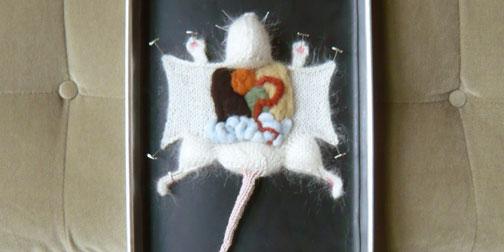 0106-knitdisections.jpg