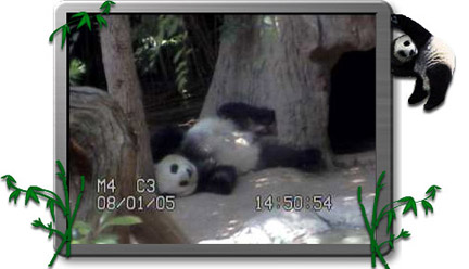 0329-Panda.jpg