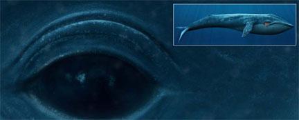 0320-Whale.jpg